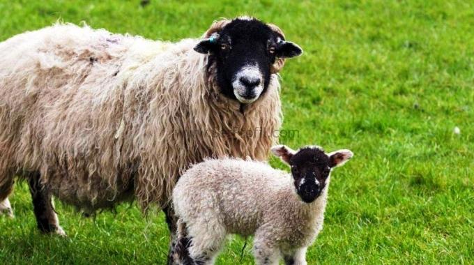 Küçükbaş Hayvan Barınakları Projeleri Kurulum Anahtar Teslim Yapım Fiyatları