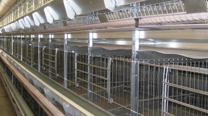 Etlik Broiler Tavuk Çiftliği Kümes Projeleri Full Anahtar Teslim Maliyeti