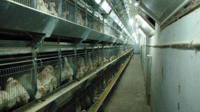 Ucuz Tavuk Kümesi Fiyatları 2018
