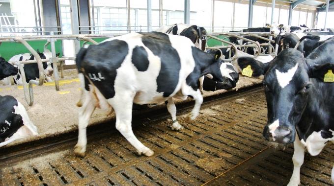 100 Büyükbaşlık Süt Sığırcılığı Projesi Maliyeti Fiyatları