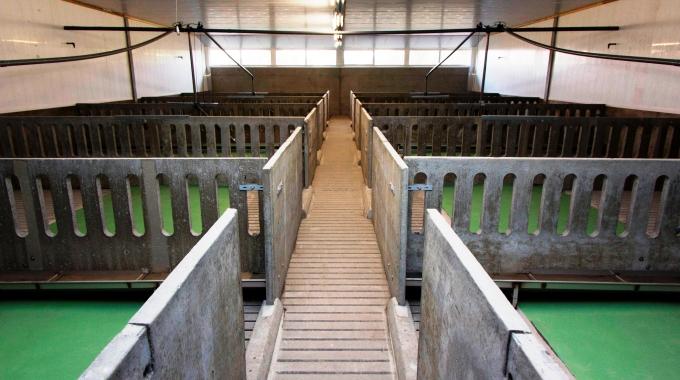 100 Başlık Süt Sığırcılığı Projesi Ahır Çiftlik Maliyeti Fiyatlandırma