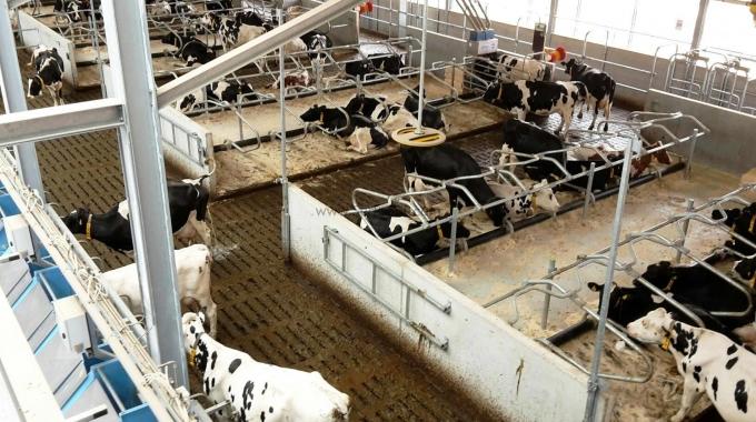 Büyükbaş Hayvan Çiftliği Proje Örnekleri İnşaat Ekipman Fiyatları