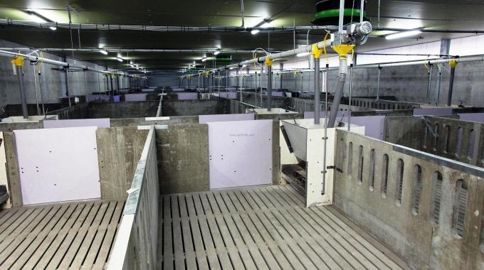 100 Büyükbaş Hayvan Ahır Çiftlik Projesi Full Otomasyon Fiyatları Maliyeti