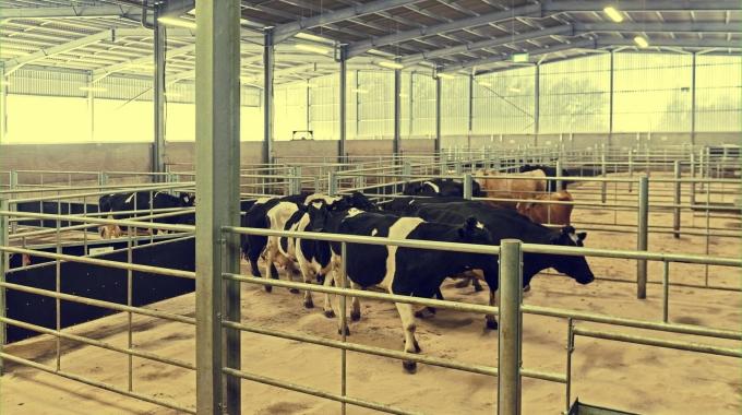 Büyükbaş Hayvan Ahır Çiftlik Projesi