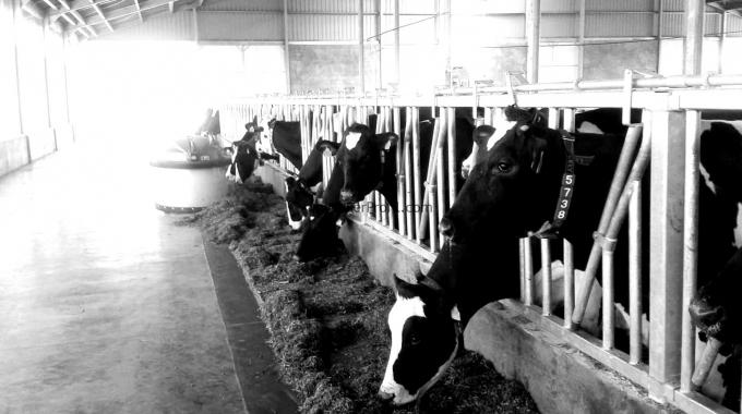 Ahır Yapım Maliyetleri Besi ve Süt Çiftliği Üzerine Fiyatlandırma