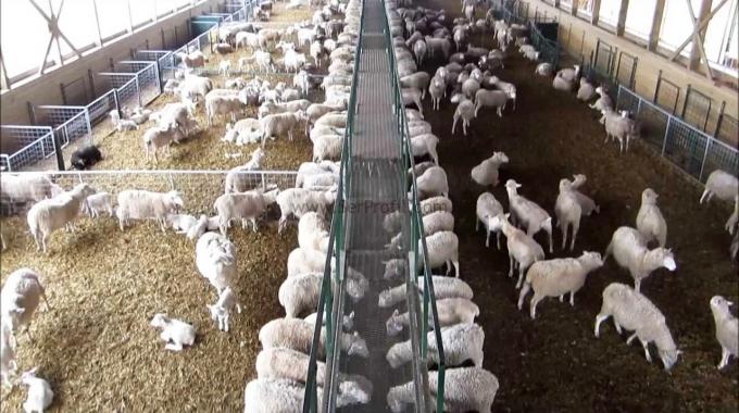 100 Başlık Anaç Keçi Koyun Çiftliği Ağıl Projeleri Maliyeti