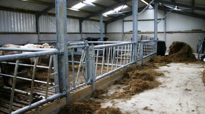 100 adet Küçükbaş Hayvan Keçi Çiftlik Maliyeti