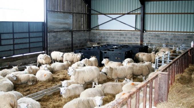 Koyun Çiftliği Fizibilite Raporu, Keçi Ağılı Projeleri Fiyatları