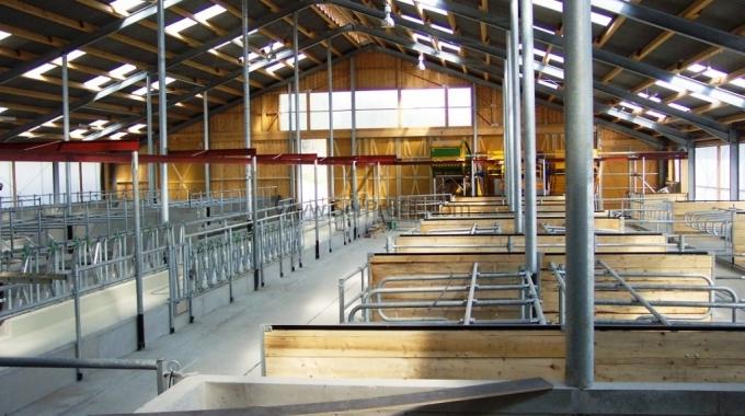 25-30 Büyükbaşlık Süt Besi Sığırcılığı Fizibilite Raporu Proje Fiyatları