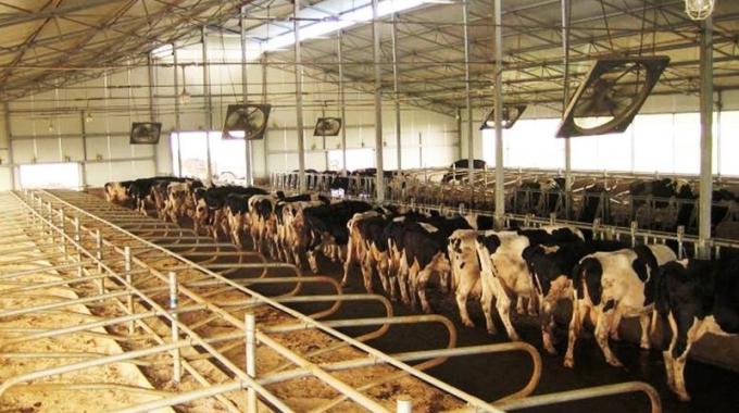 MODERN Büyükbaş Hayvan Besi Süt Çiftliği Proje Örnekleri Fizibilite Maliyetleri