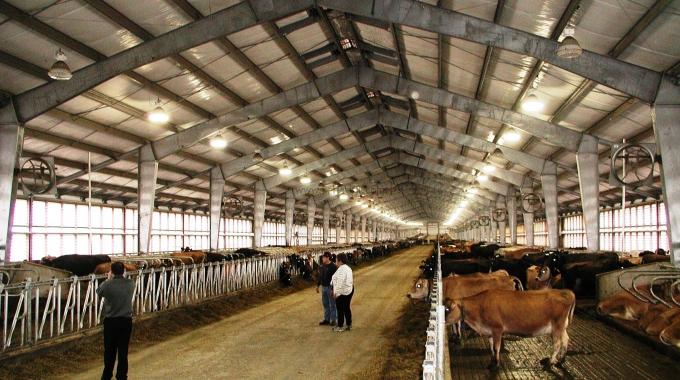 100 Başlık Süt Sığırcılığı Projesi Maliyeti 2017