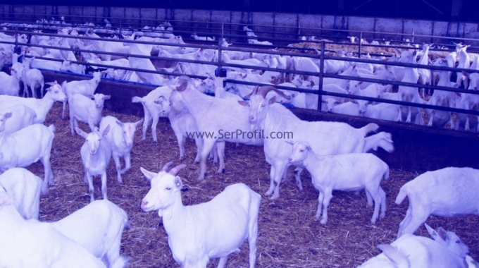 Keçi Çiftliği Koyun Ağılı Projeleri İnşaat Ekipman Maliyetleri