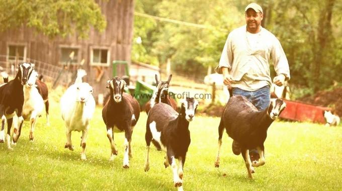 Koyun Keçi Çiftlikleri Projeleri Fiyatları TKDK Avrupa Birliği Uyumlu MODERN