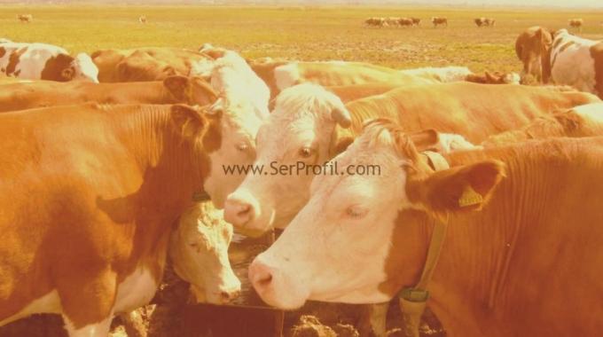 Küçükbaş Büyükbaş Hayvan Barınakları Ahır Çiftlik Projesi Fiyatları